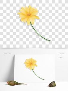 原创简约一枝金菊花朵