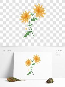 原创手绘风一束菊花