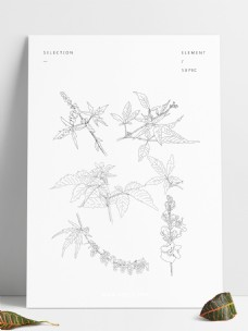 手绘植物荆条套图元素