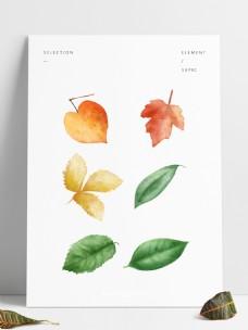 叶子秋天落叶