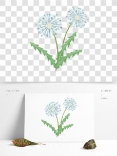 手绘清新蒲公英植物花卉