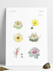 重阳节手绘卡通菊花