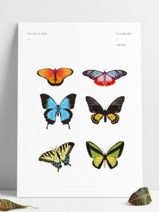 飞舞五彩蝴蝶套图